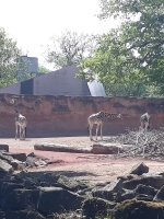 10. Geburtstag/Besuch Zoo Hannover 27.04.2019